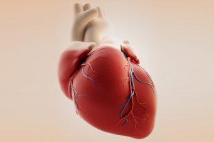 صورة صور قلب الانسان , احدث صور لقلب الانسان