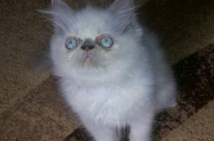 صور قطط رومي , القطط الاكثر جاذبية