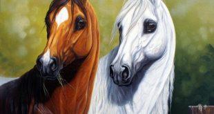 صورة صور خيول , اجمل واحلى خيول في العالم