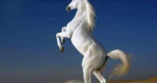صورة اجمل صور خيول , قوه وجمال الخيول