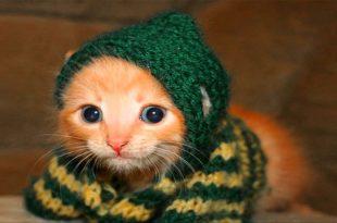 صور صور قطط مضحكة , قطط ظريفة وطريفة
