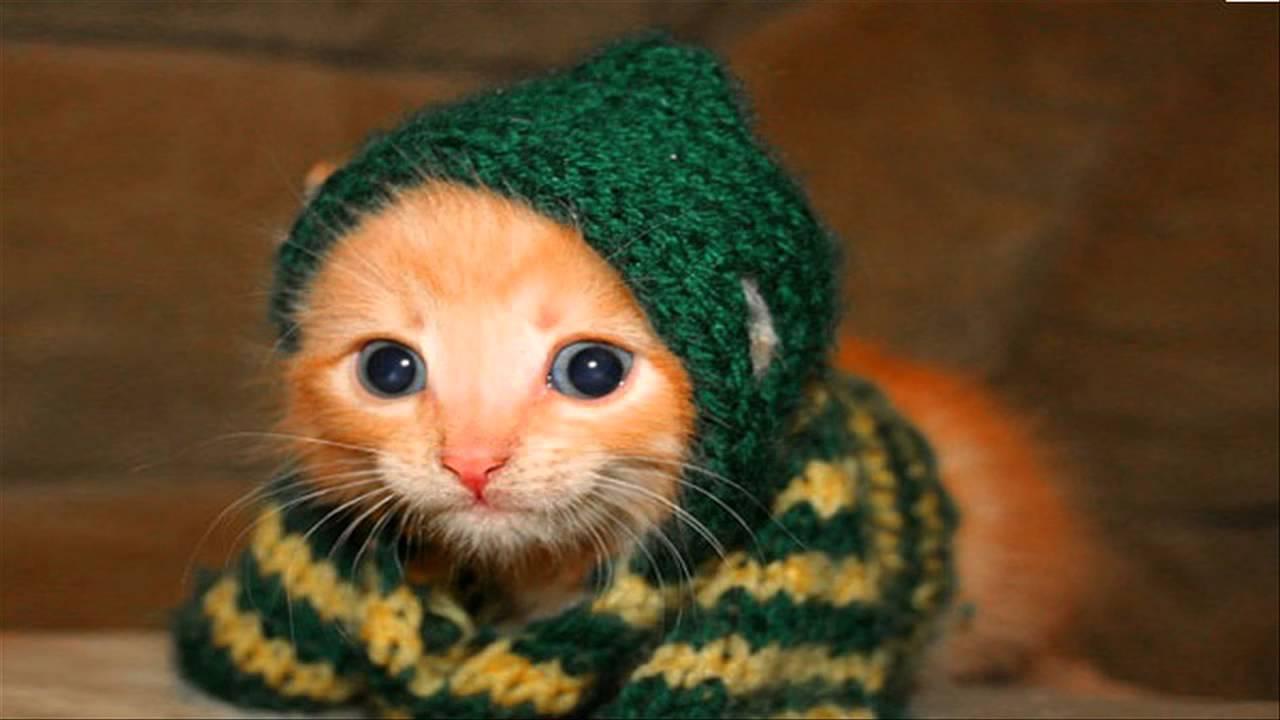 صورة صور قطط مضحكة , قطط ظريفة وطريفة