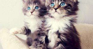 صور صور قطط متحركة , اجدد الصور المتحركه للقطط
