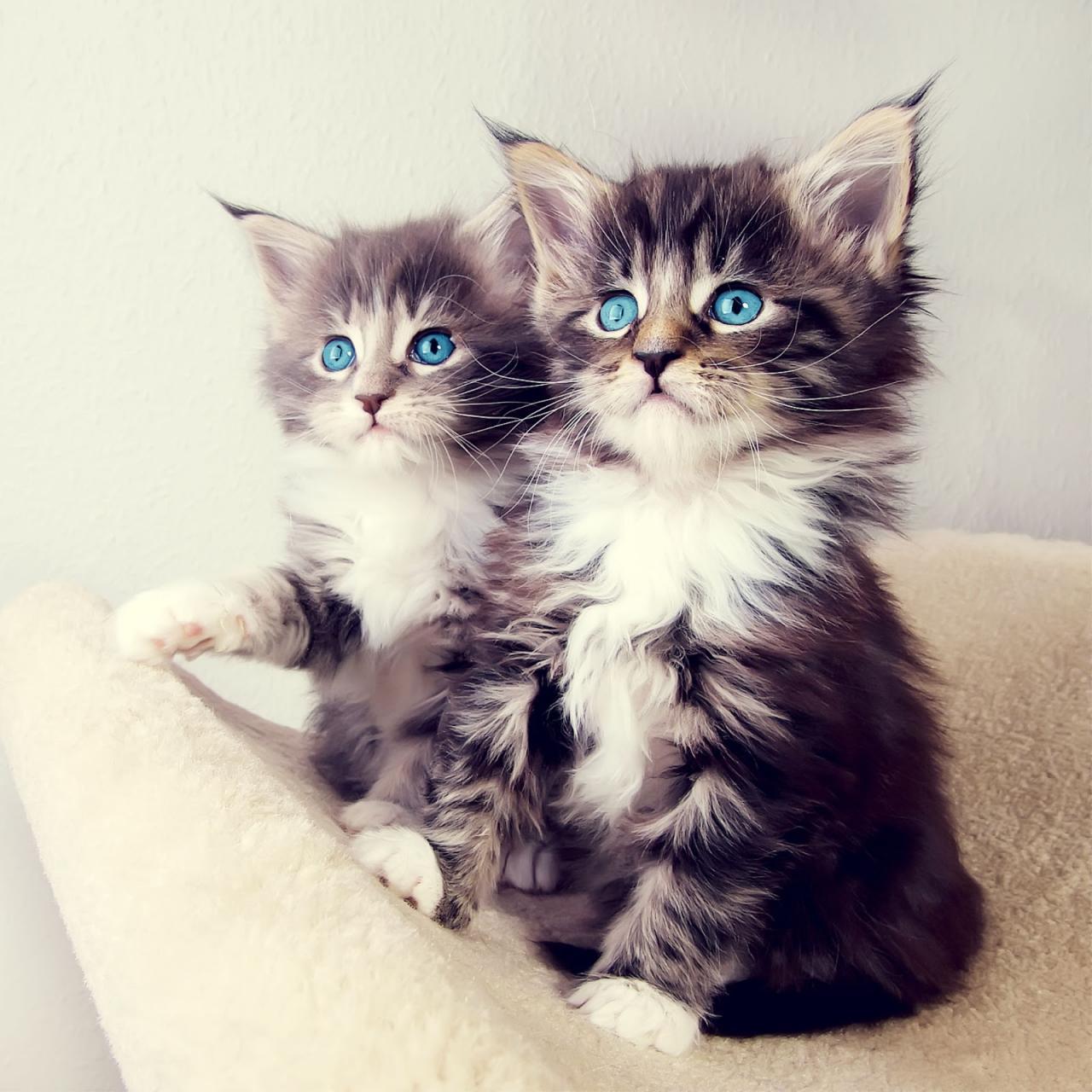 صورة صور قطط متحركة , اجدد الصور المتحركه للقطط