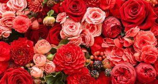 صور احلى صور ورد , اشكال والوان الورد الجميله