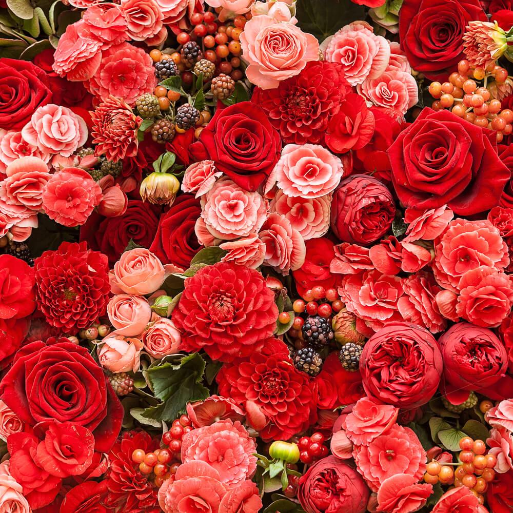صورة احلى صور ورد , اشكال والوان الورد الجميله
