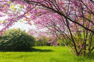 صور صور فصل الربيع , الربيع احلي فصول السنه