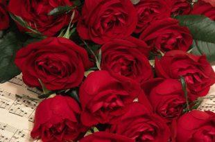 صورة صور ورد جديد , الورد نبات ناعم وحساس