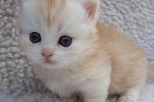 صورة صور اجمل قطط في العالم , احلي صور قطط في العالم