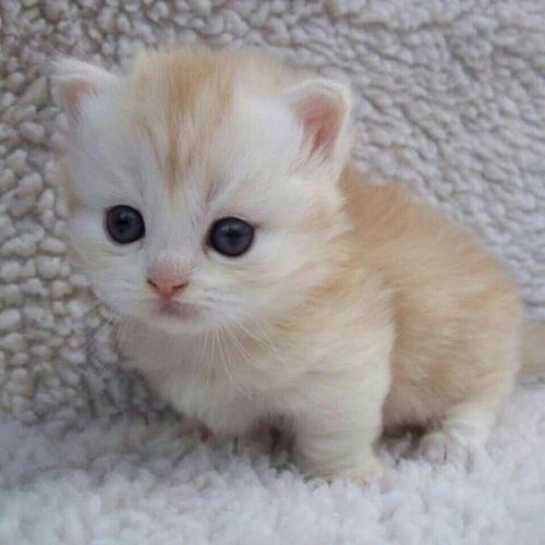 صور صور اجمل قطط في العالم , احلي صور قطط في العالم