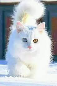 صورة صور قطط كيوت , قطط كيوت و جميله جدا بالصور