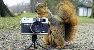 صور اغرب الصور في العالم , صور غريبه جدا في العالم