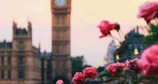 صور صور ورود روعه , الورود و جذابيتها بصور روعه