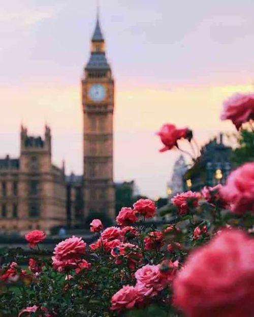 صورة صور ورود روعه , الورود و جذابيتها بصور روعه