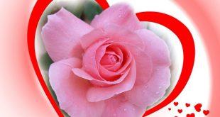 اجمل ورود الحب